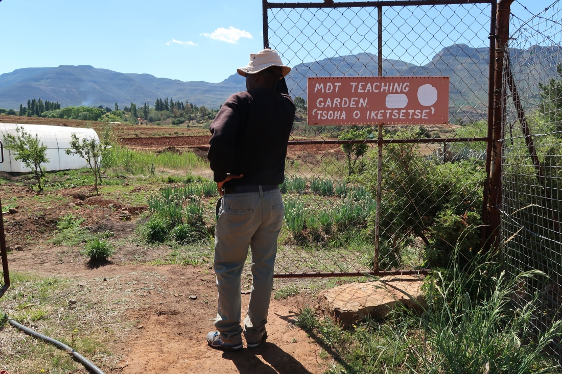 Malealea Development Trust field worker surveys the MDT's Teaching Farm with crops, mountains, and the polytunnel, conservation agricultural techniques are taught to community members here